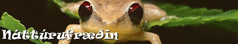 http://www.netskoli.is/serverkefni/stodnam/theme/images/bg/header_image4.jpg
